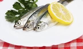 sardinas valor nutricional
